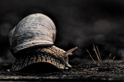 Curved in 35 Examples Of Stunning Macro Photography