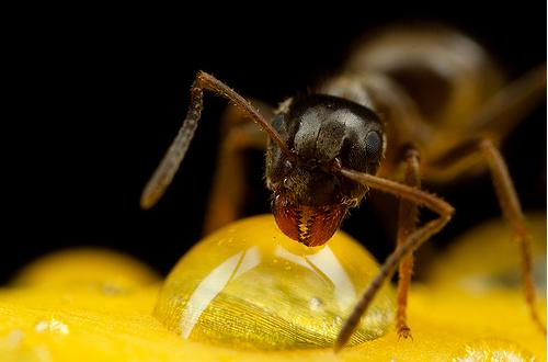 Ant in 35 Examples Of Stunning Macro Photography