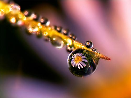 Dewdrop in 35 Examples Of Stunning Macro Photography