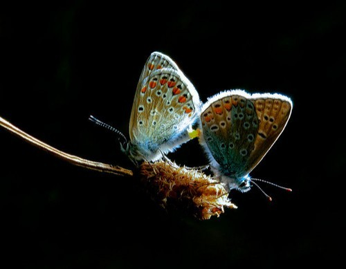 Ins2 in 35 Examples Of Stunning Macro Photography