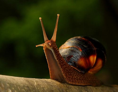 Snail in 35 Examples Of Stunning Macro Photography