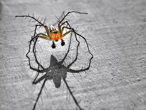 Spider in 35 Examples Of Stunning Macro Photography
