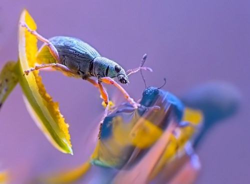 Vio in 35 Examples Of Stunning Macro Photography